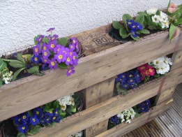 Wooden pallet planted with flowers
