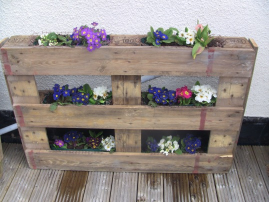 Wooden pallet planted with spring flowers